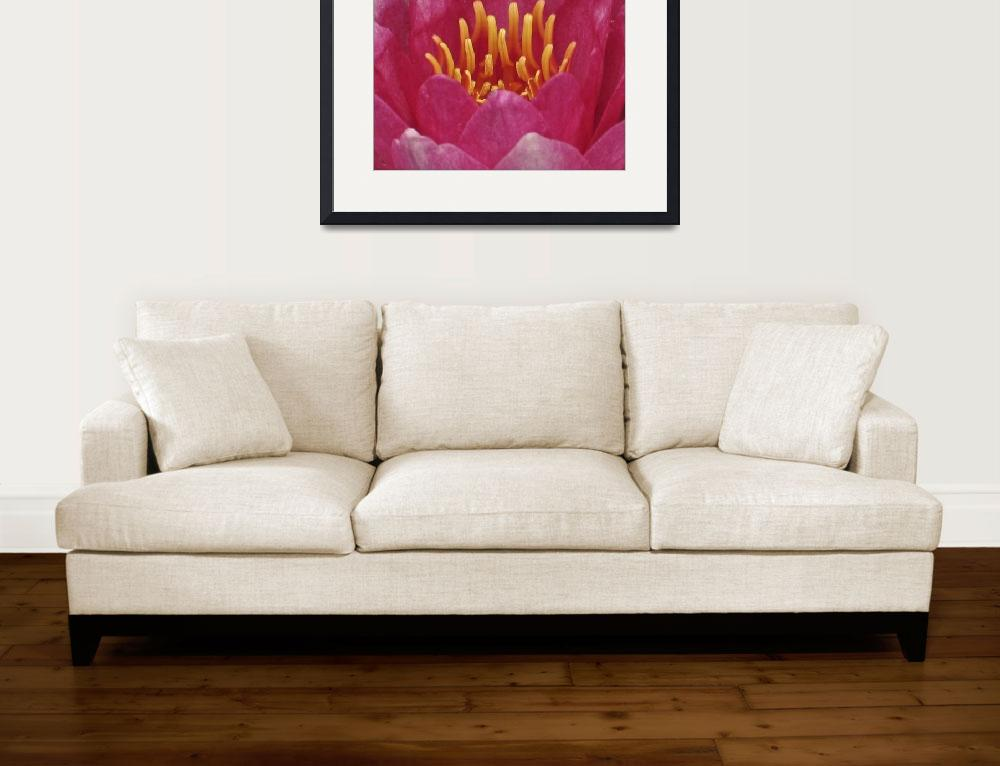 """""""The Sensual Water Lily""""  (2008) by PhotographsByCarolFAustin"""