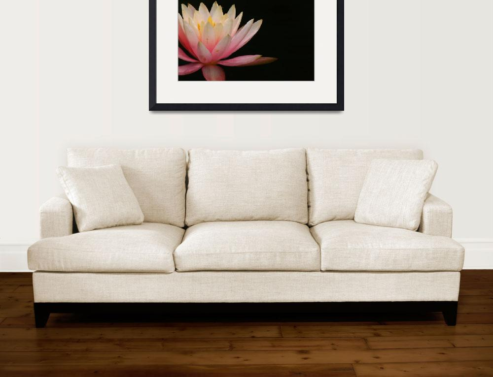 """Pink Water Lily&quot  (2011) by swaby"