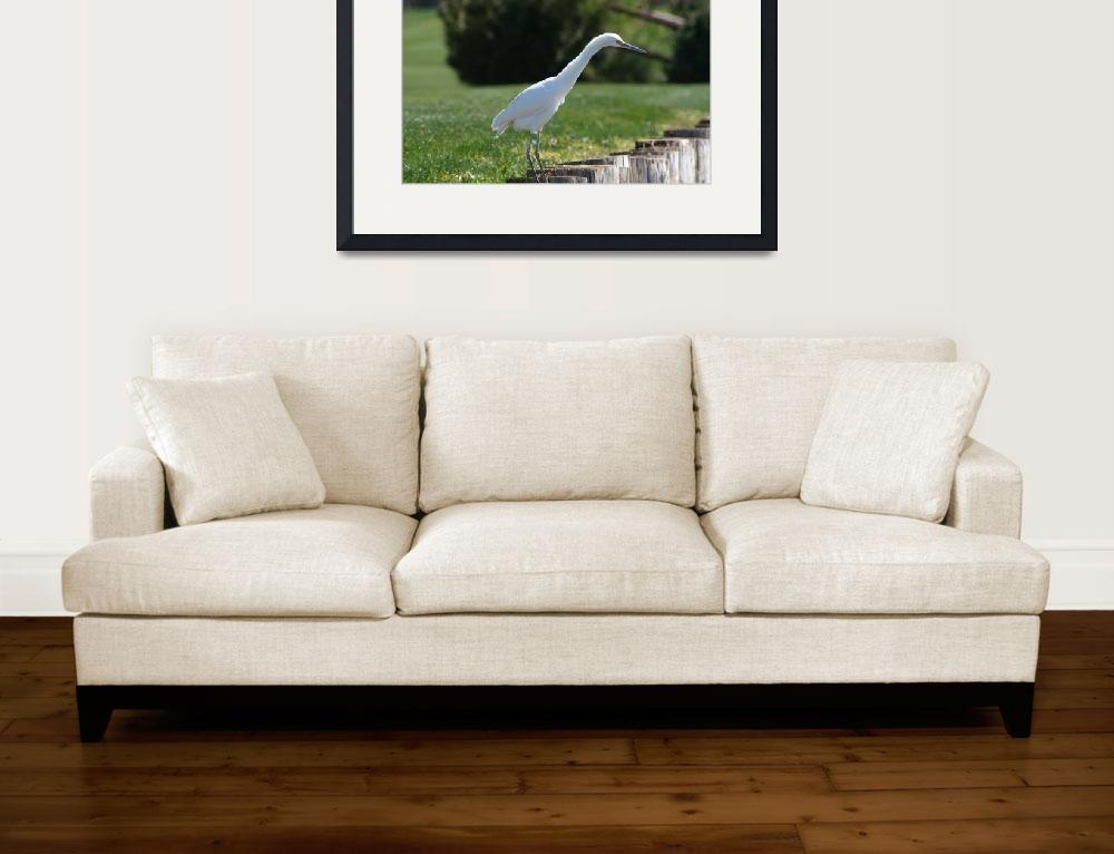 """""""Egret Look Out""""  (2008) by emilyrodriguez"""