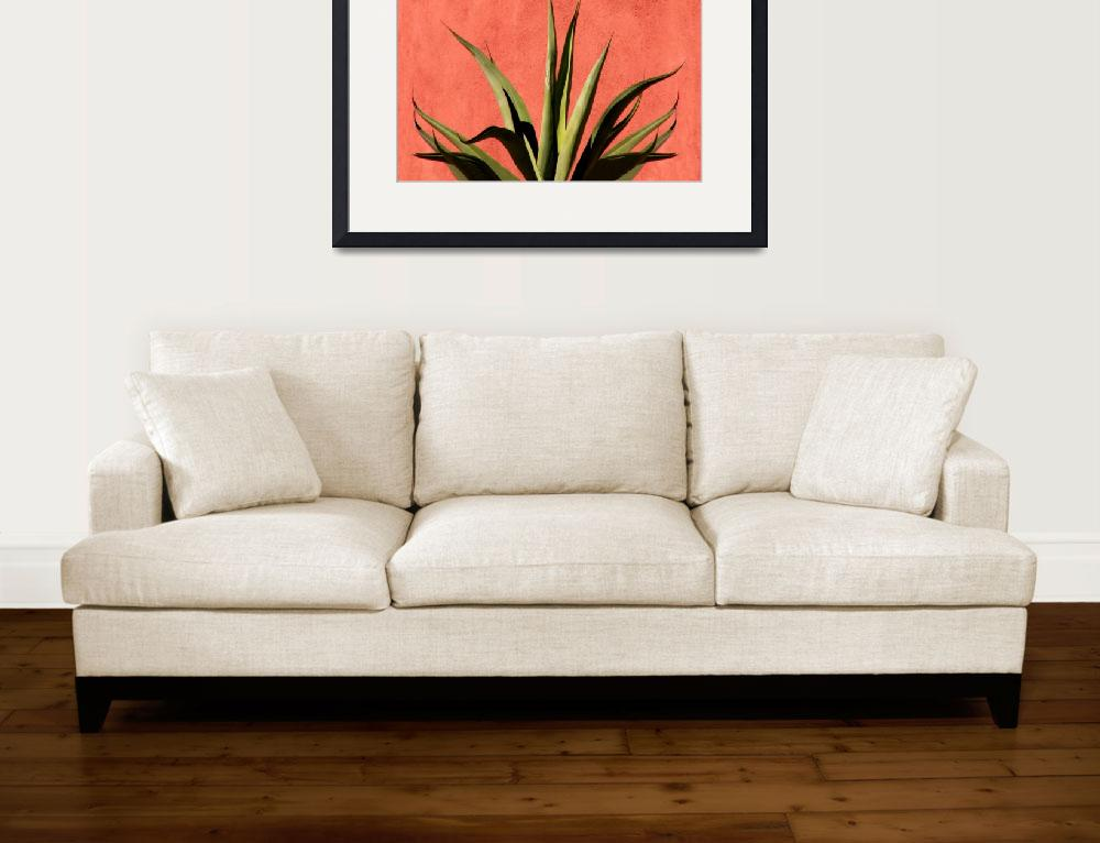 """""""Agave on Red Stucco""""  (2007) by lisakhering"""