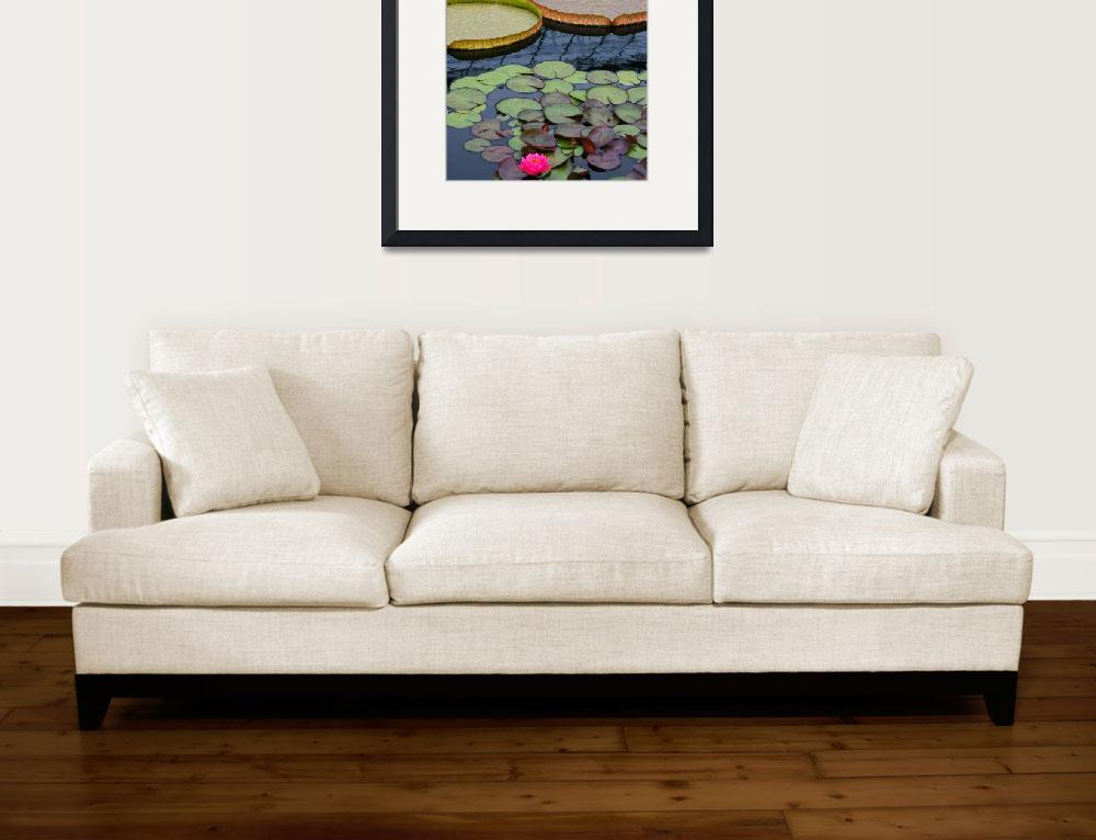 """""""Water Lilies And Platters 2&quot  (2011) by LightHeart"""