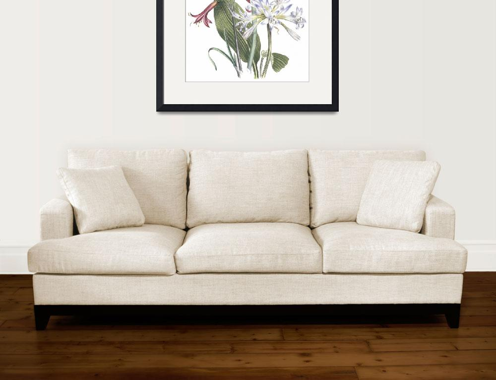 """""""Griffinia & Phycella Flowers by Jane Webb Loudon&quot  by ArtLoversOnline"""