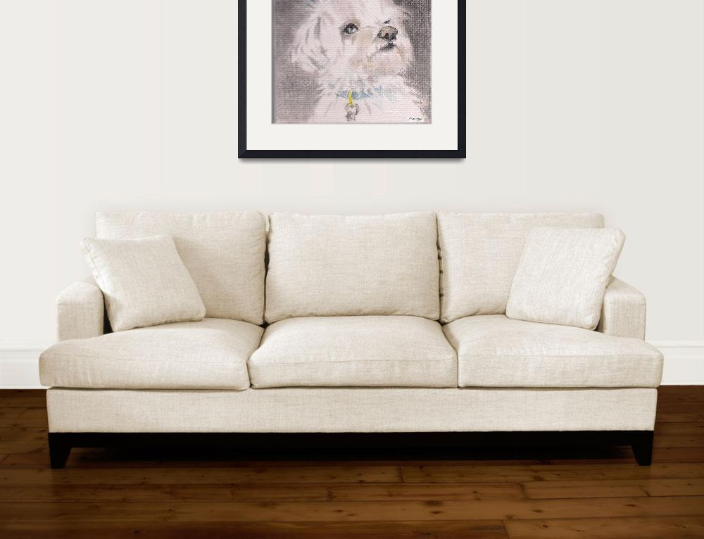 """MAX THE MALTESE""  by JayneSomogy"