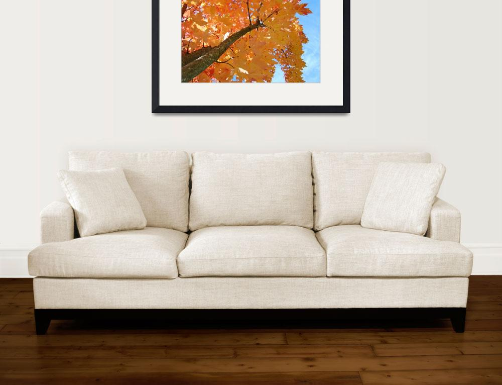 """Autumn Trees Blue Sky Looking Up Leaves Fall art p&quot  (2013) by BasleeTroutman"