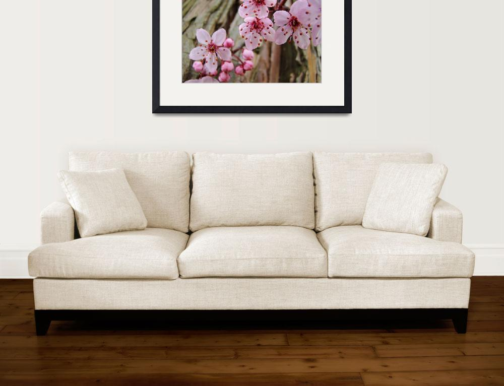 """""""BLOSSOMS Spring 14 Pink Tree Blossoms Art Prints&quot  (2009) by BasleeTroutman"""