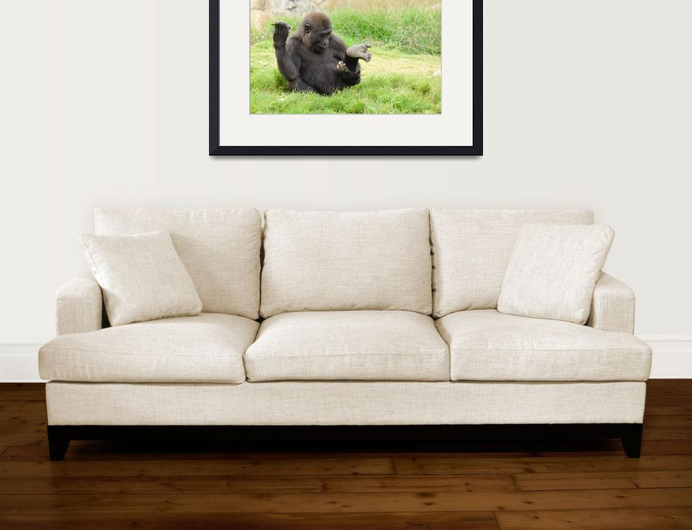 """""""Baby Gorilla&quot  (2013) by tracilawphotography"""