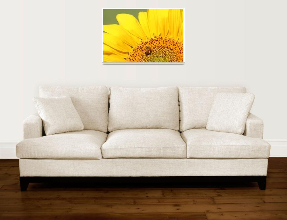 """Bee on Sunflower""  by creativesam"