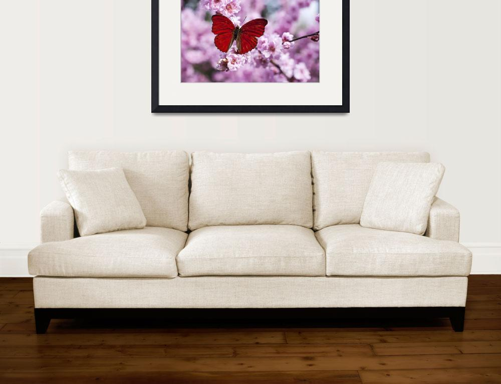 """""""Red butterfly on plum blossom branch""""  (2009) by photogarry"""