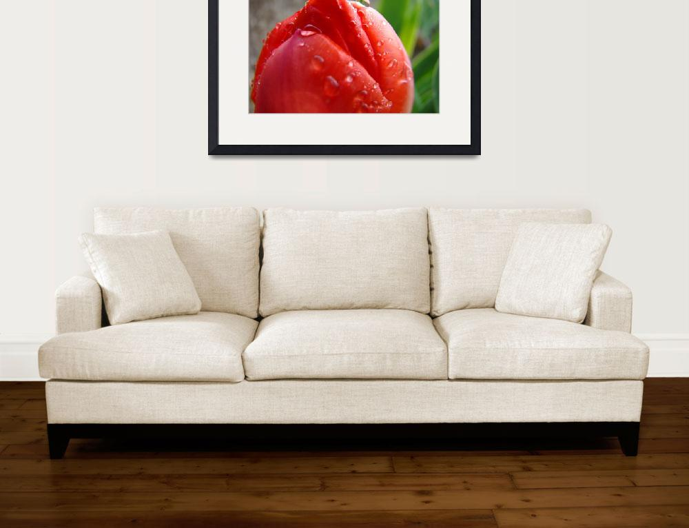 """""""Christmas Gift Gallery RED TULIP Flower Art""""  (2009) by BasleeTroutman"""