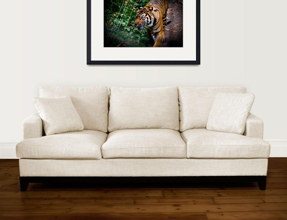 """""""Pacing Tiger""""  (2010) by vanOgtropPhotography"""