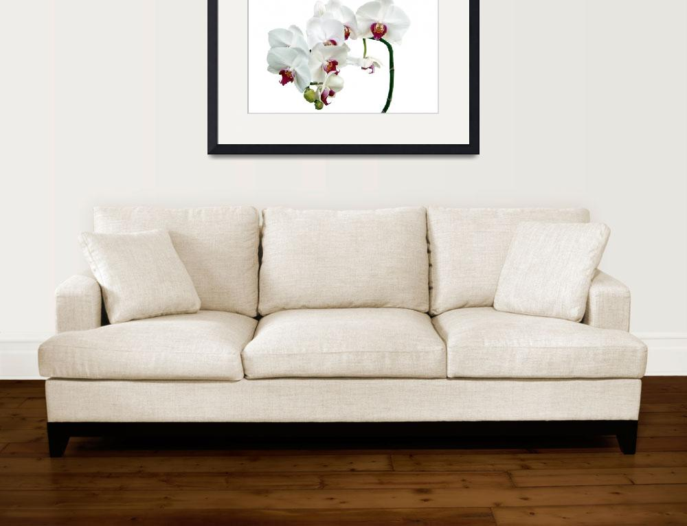 """""""White Orchids&quot  (2011) by AnnG"""