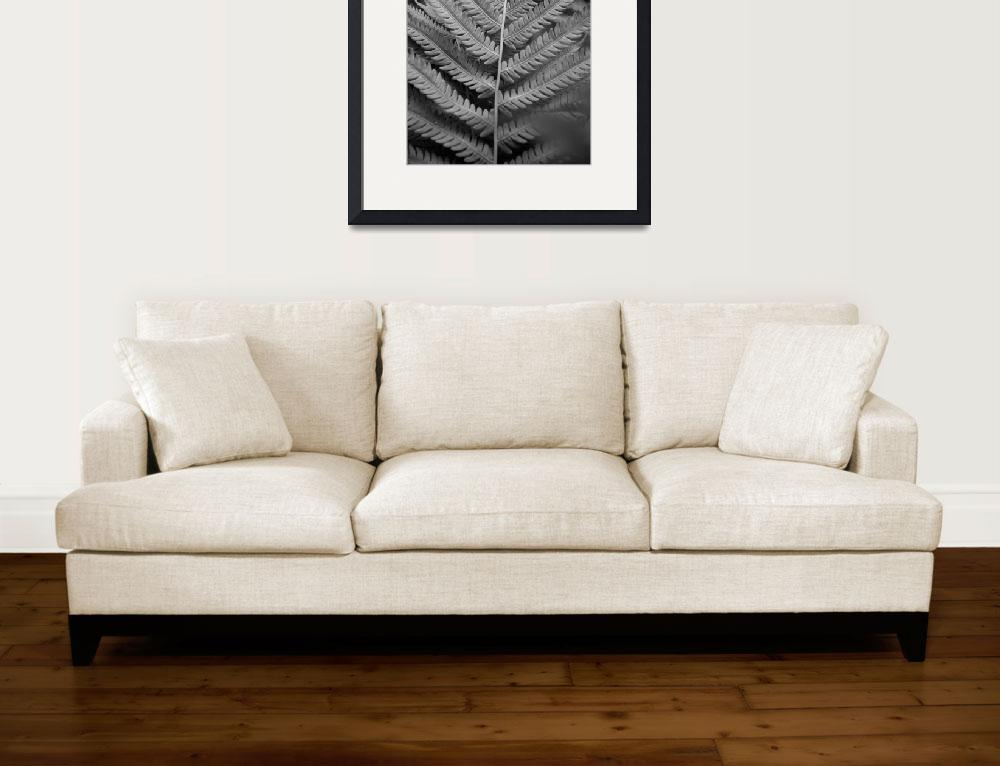 """""""Black and White Fern""""  (2010) by overbeck"""
