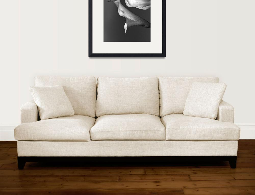 """""""Calla Lily V&quot  (2010) by bavosiphotoart"""