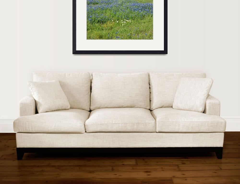 """""""TexasBlue Bonnets&quot  (2010) by GlendinePhotography"""