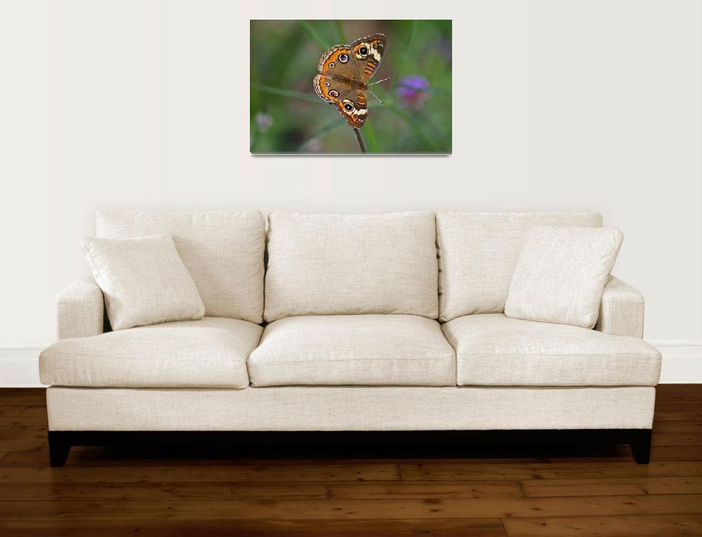 """Butterfly  Buckeye with Green background""  (2011) by KsWorldArt"