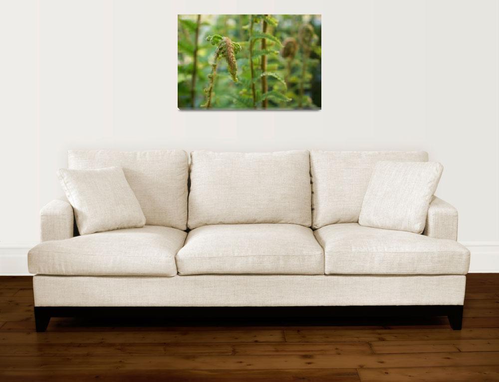 """Ferns Green Fern Fronds Forest Art Photography&quot  (2014) by BasleeTroutman"