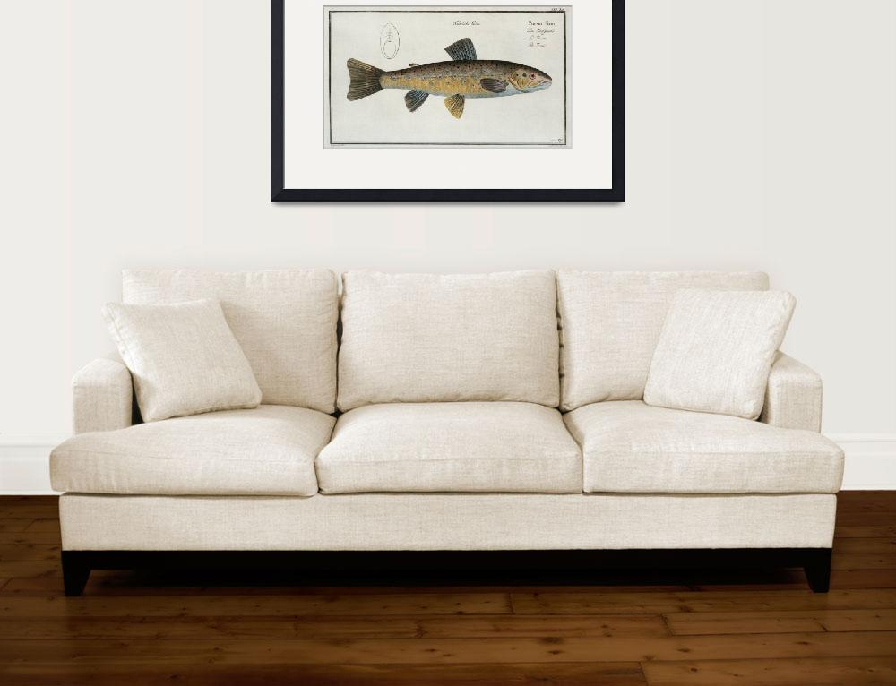 """""""Vintage Illustration of a Brown Trout (1785)&quot  by Alleycatshirts"""