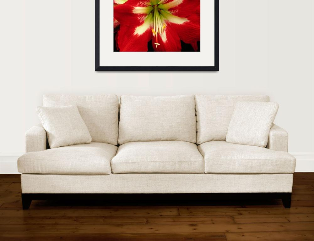 """""""LILY""""  by Mimamor"""