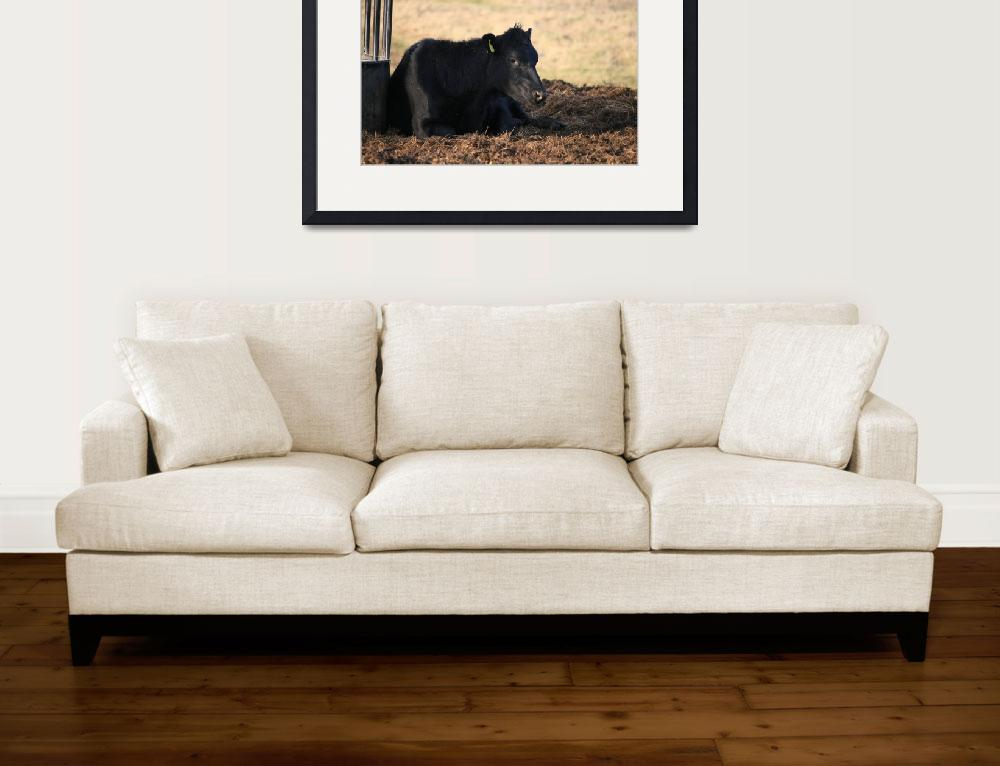"""""""Resting Cow&quot  (2012) by Vortex24"""