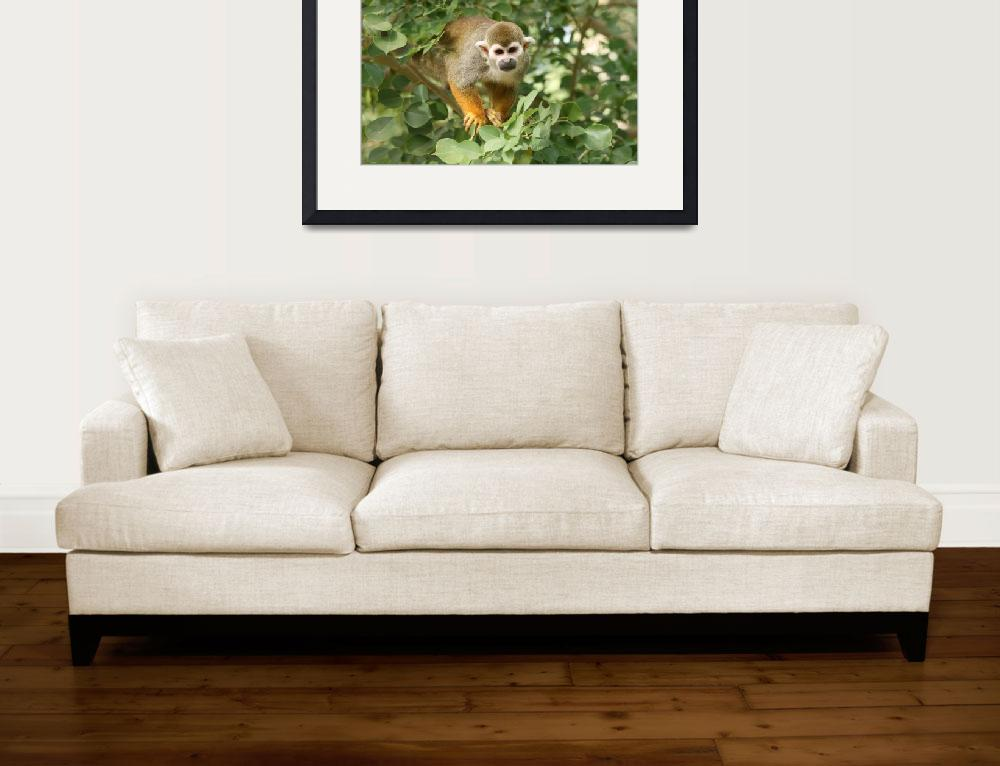 """Curious Monkey""  (2008) by photosbywendy"