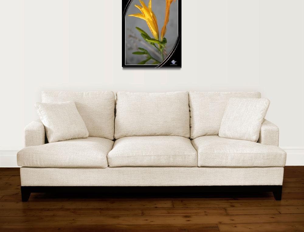"""""""FLOWER PORTRAIT&quot  by sandytravel"""