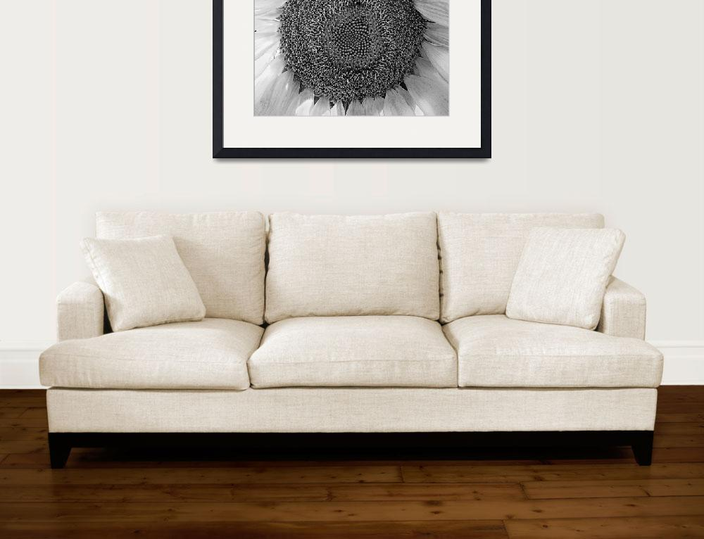 """Sunflower&quot  (2005) by RussMartinPhotography"
