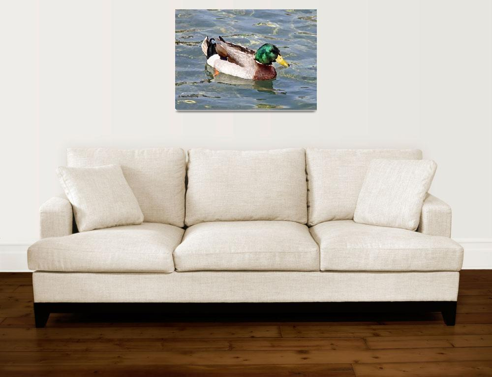 """Mallard Duck Art""  by NoteworthyStudio"
