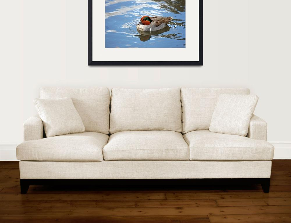 """""""Green-winged Teal&quot  (2009) by 9livesimages"""