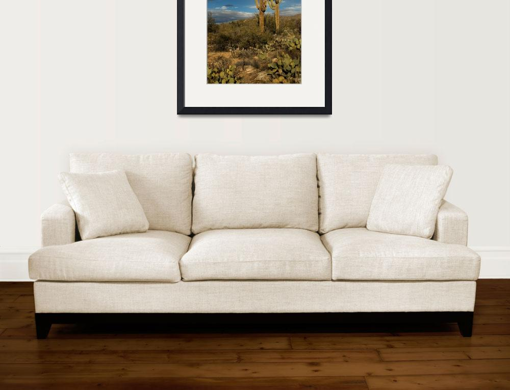"""""""Saguaros Before the Storm&quot  (2006) by shzimmerman"""