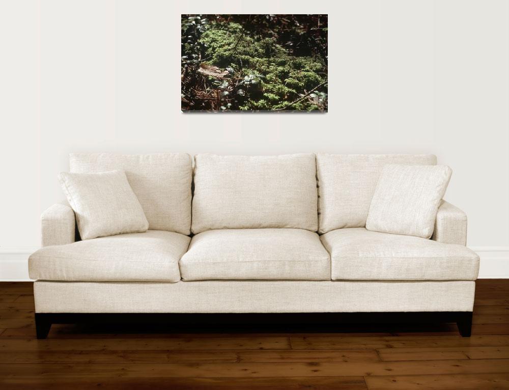 """Grass moss foliage close up macro&quot  by RomanPopov"
