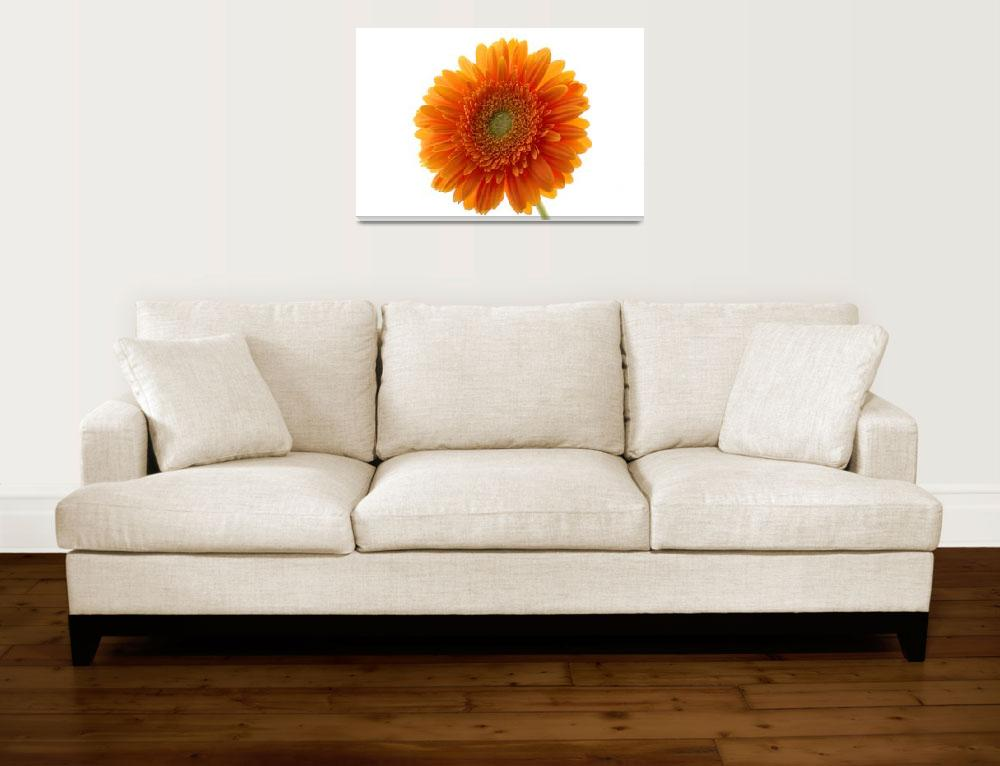 """Gerber Daisy""  (2008) by TerribleT"