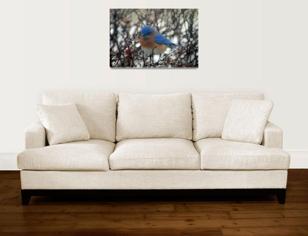 """Bluebird in Winter&quot  (2011) by KsWorldArt"