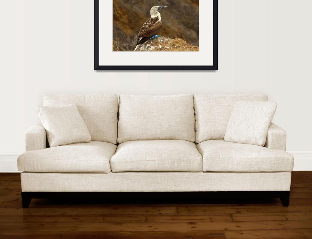 """""""Blue Footed Boobie on a Rock&quot  (2015) by rhamm"""