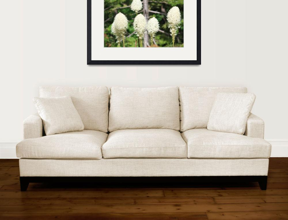 """""""Bear Grass 2&quot  (2009) by AlyceTaylor"""