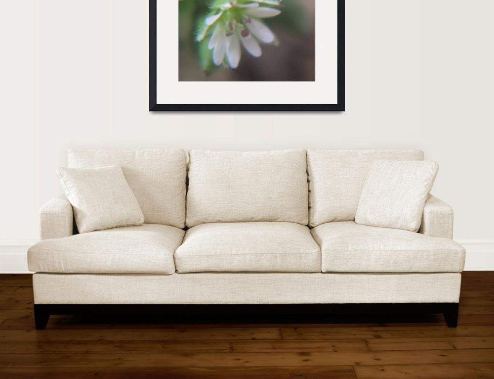 """""""Chickweed in pastel elegance.""""  (2017) by NaturesAccess"""