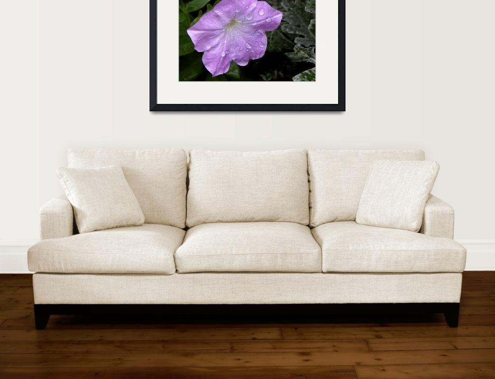 """Petunia After the Rain&quot  (2011) by SandiOReilly"