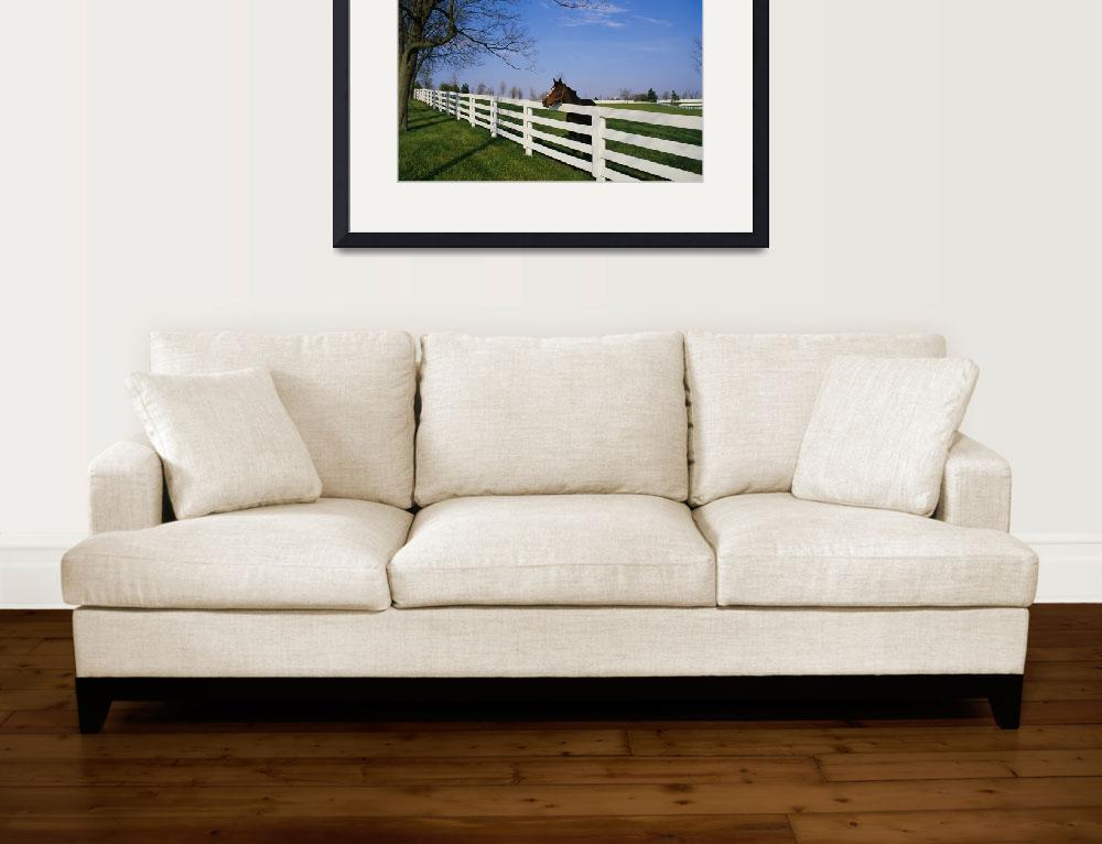 """Thoroughbred Horse Lexington KY""  by Panoramic_Images"