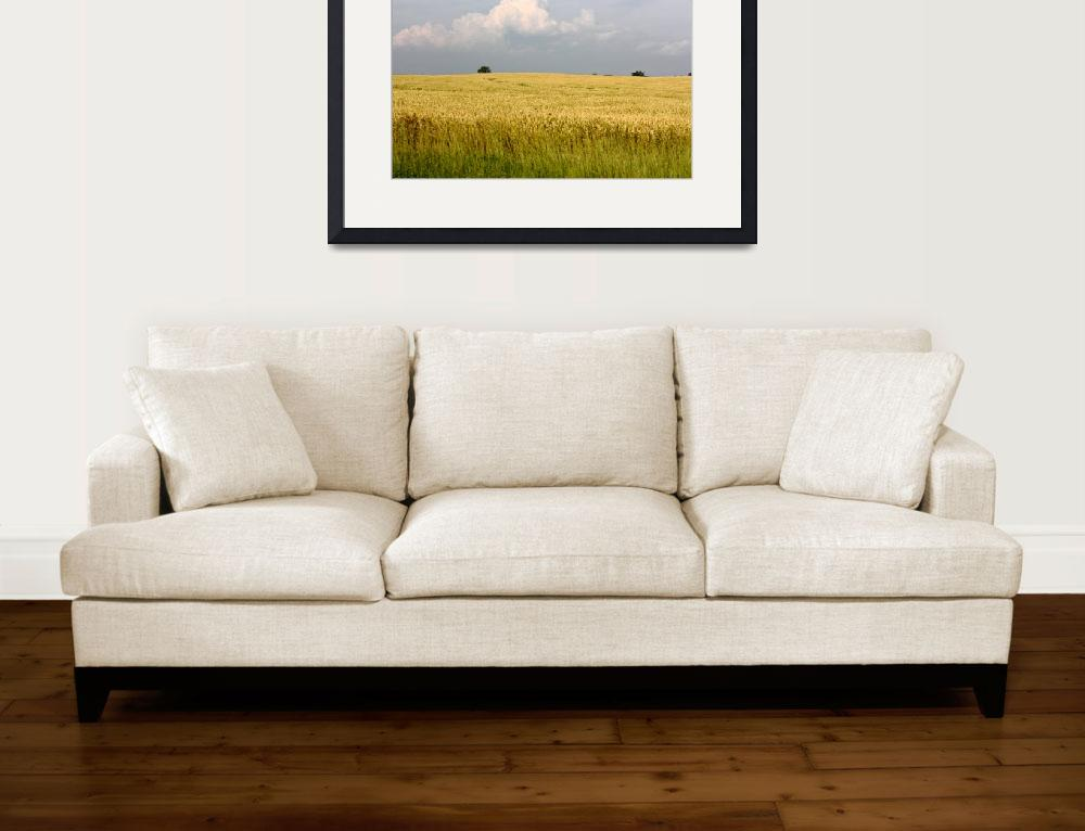 """Field of Wheat Against Turbulent Sky&quot  (2010) by fotobits"