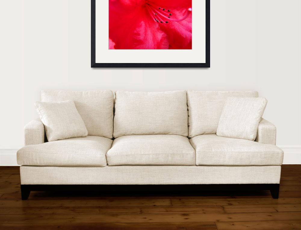 """""""Rhodie Red art print Rhododendrons Floral Macro&quot  (2010) by BasleeTroutman"""