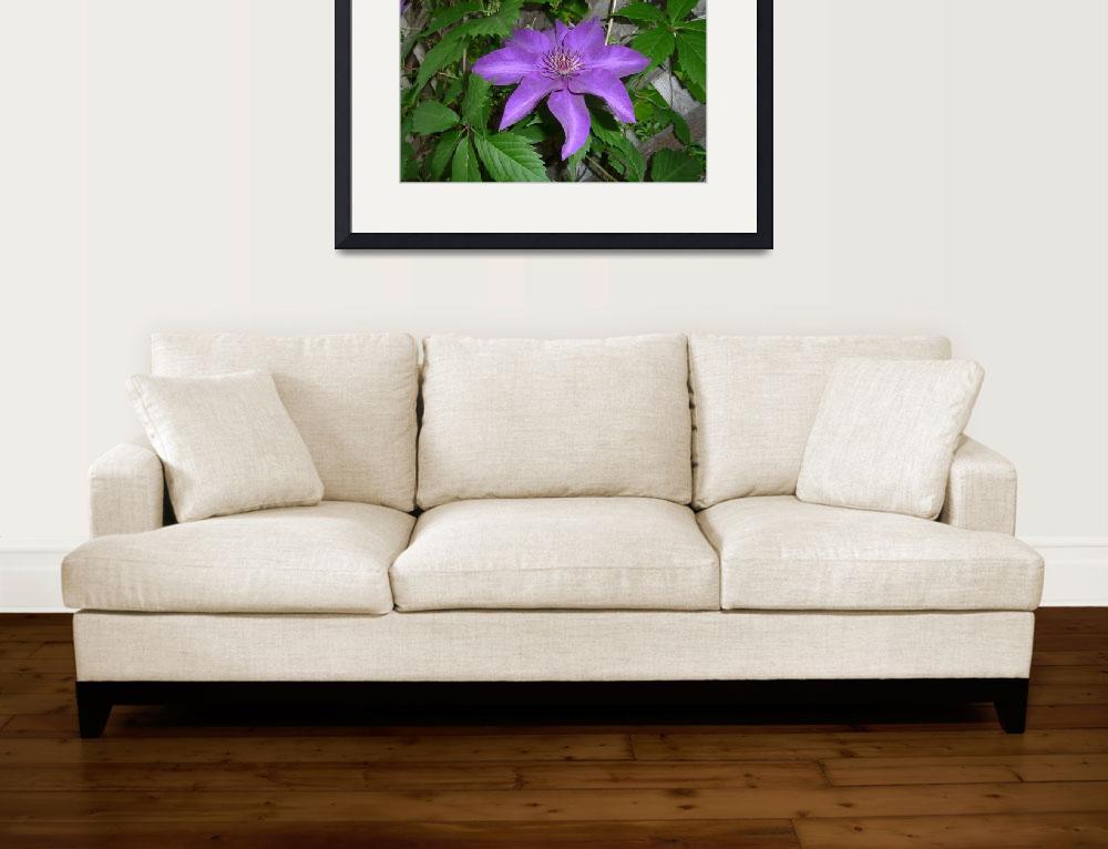 """""""Purple Clematis&quot  (2009) by Aquila6"""