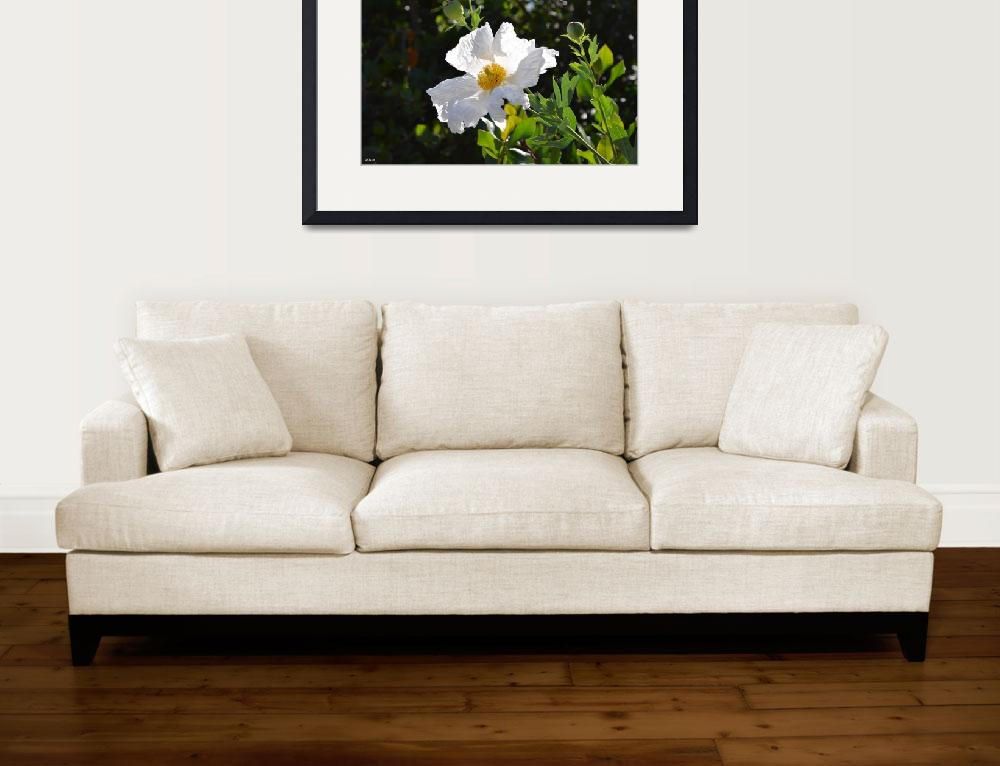 """""""Peaceful White Flower&quot  (2012) by theblueplanet"""