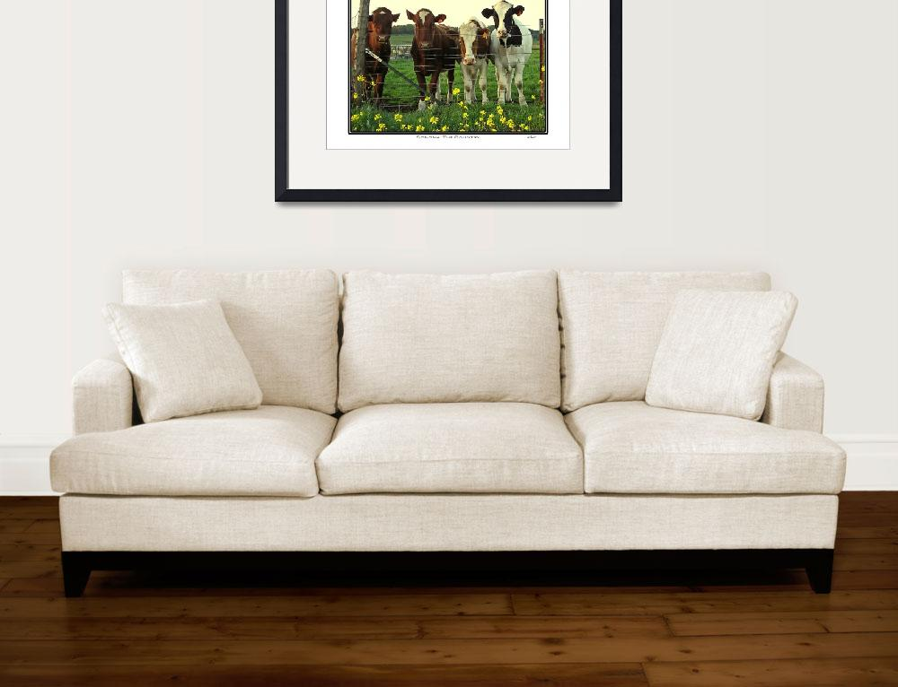 """Cow Herd, Sonoma California&quot  (2009) by Bracco"