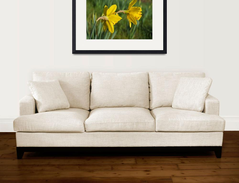 """Daffodils Springtime Green Meadow Field""  (2014) by BasleeTroutman"