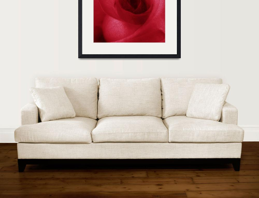 """""""Red Rose&quot  (2014) by RubinoFineArt"""