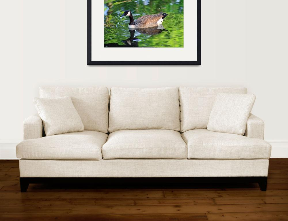 """""""Canada Goose on Green Lake&quot  (2012) by KsWorldArt"""