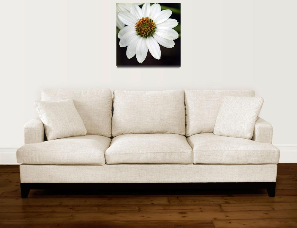 """White Coneflower Echinacea""  (2012) by KsWorldArt"