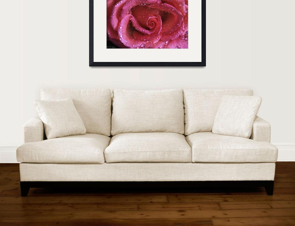 """""""Shimmering Pink Rose&quot  (2012) by Tracy2912"""