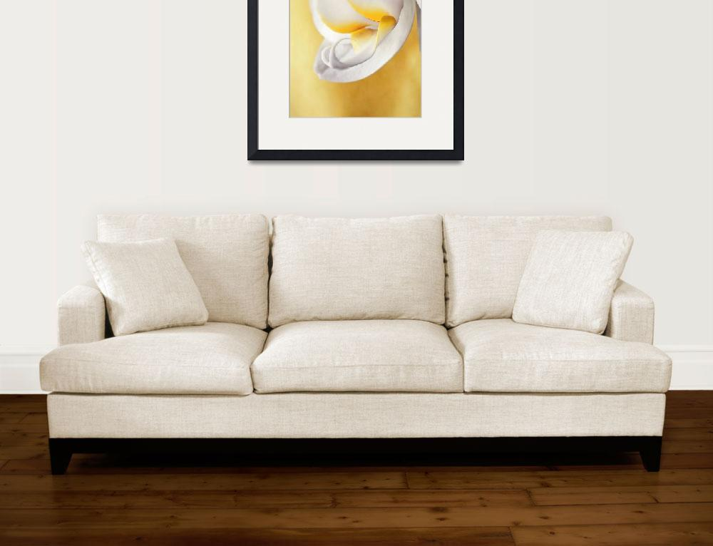 """White Orchid&quot  (2011) by Piri"