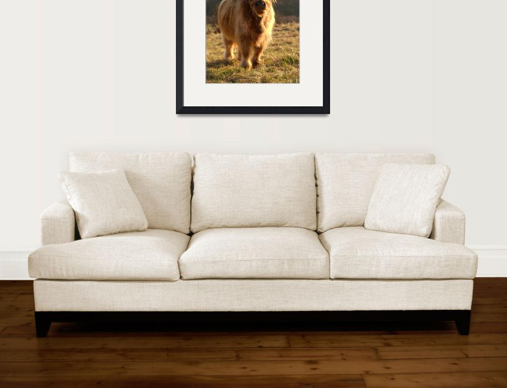 """""""Young Highland Cow&quot  by Serena"""