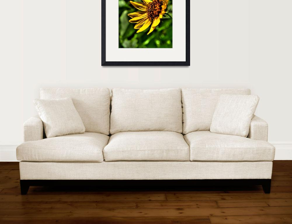"""Black-Eyed Susan""  (2009) by NjordPhotography"